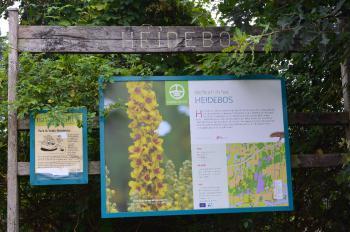 Sfeer - Moerbeke ~ Het Heidebos (Oost-Vlaanderen) 30-07-2016 ©Steve Wullaert