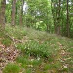 Elachista geminatella - Veldbiesmineermot