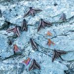 Groepsfoto - Furfooz ~ Parc national de Furfooz (Namen) 10-06-2017 ©Ben Steeman