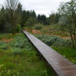 Sfeer - Bihain ~ Le Grand Fagne et le Sacrawe - Plateau des Tailles (Luxemburg) 07-08-2021 ©Steve Wullaert