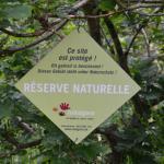 Sfeer - Fauvillers ~ Ruisseau de Geronval (Luxemburg) - 20-06-2020 ©Steve Wullaert