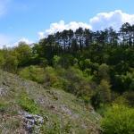 Sfeer - Furfooz ~ Parc naturelle de Furfooz (Namen) 04-05-2019 ©Steve Wullaert