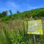 Sfeer - Heinsch ~ Marais de Heinsch (Luxemburg) 19-07-2020 ©Steve Wullaert