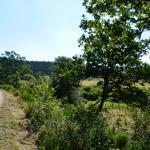 Sfeer - Rocherath ~ Vallée de la Holzwarche (Luik) 08-08-2020 ©Steve Wullaert