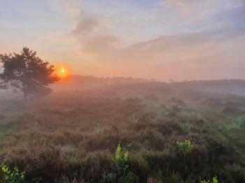 Sfeer - Kalmthout ~ Kalmthoutse Heide (Antwerpen) 10-07-2021 ©Steve Wullaert
