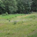 Sfeer - Chantemelle ~ Marais de Chantemelle (Luxemburg) 26-06-2021 ©Steve Wullaert