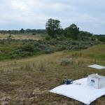Sfeer - De Panne ~ Krakeelduinen (West-Vlaanderen) 03-07-2021 ©Steve Wullaert