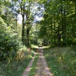 Sfeer - Lamorteau ~ Au Petit Chenoi (Luxemburg) 01-08-2020 ©Steve Wullaert