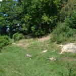 Sfeer ~ Riemst - Kanne ~ Plateau van Caestert (Limburg) 12-07-2020 ©Steve Wullaert