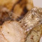 Fomoria septembrella - Hertshooimineermot